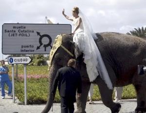 Novia llegando a la boda sobre un elefante. Bodas Temáticas.