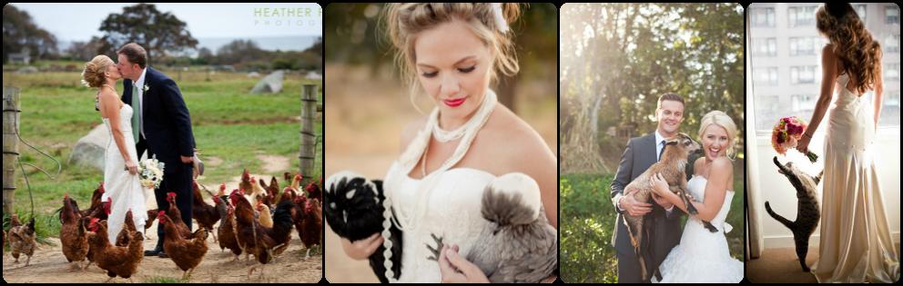 Animales de granja en tu boda
